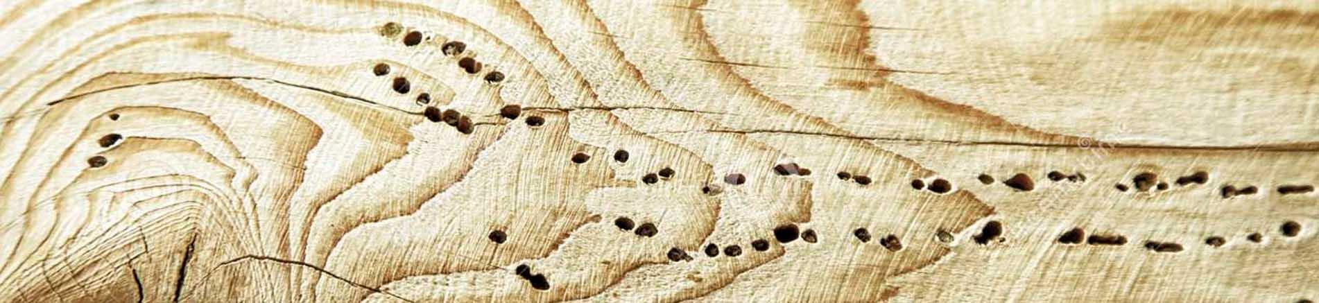 Trattamento anti tarlo…perchè?